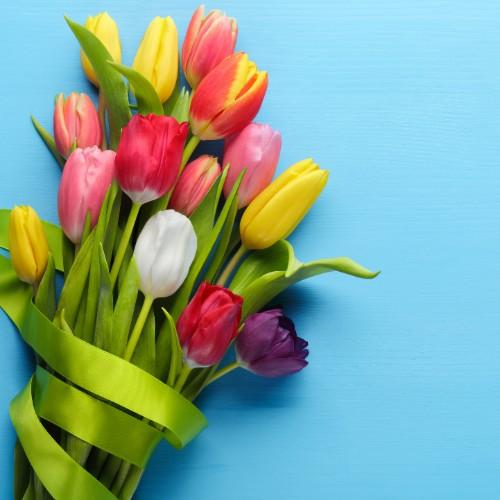 15 Tulipes