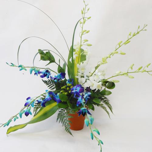Orchidées bleues et blanches